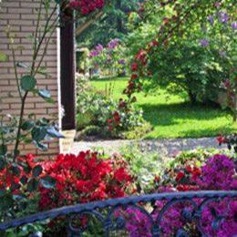 Gartensanierung Frankfurt am Main